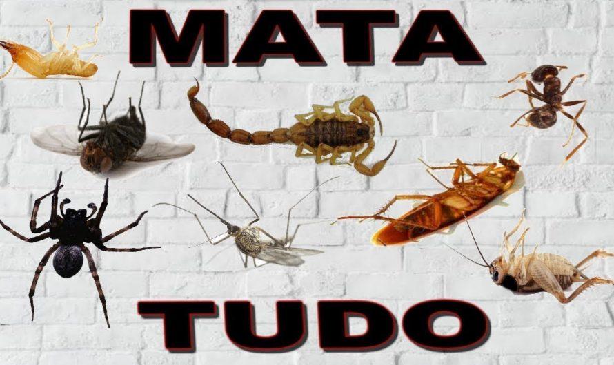 O MELHOR INSETICIDA CASEIRO QUE EXISTE. SIMPLES DE FAZER E FATAL!